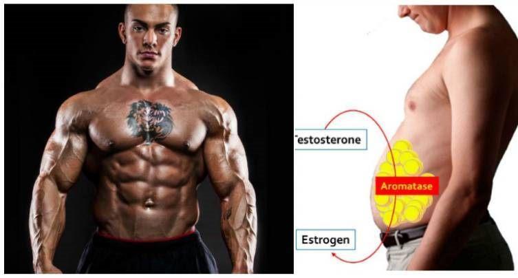 Methods to Reduce Estrogen Levels in Male
